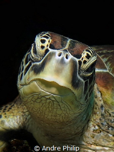 lovely green turtle by Andre Philip